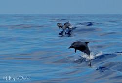 Tour de ballenas y delfines en Bahía Drake