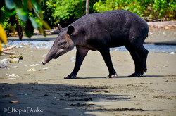 Parque Nacional Corcovado Bahía Drake