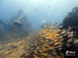 Buceo en Isla del Caño, Bahía Drake, Costa Rica