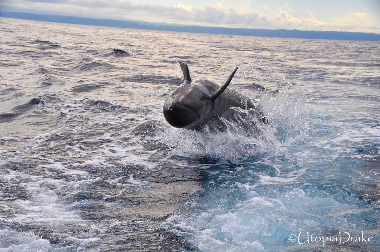 Tour de delfines Bahía Drake