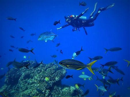 Buceo y snorkeling en Isla del Caño Bahía Drake