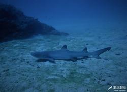 Buceo en Isla del Caño Bahía Drake