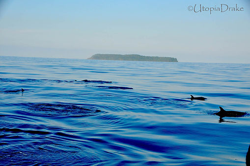 Scuba diving, snorkeling and whales in Drake Bay