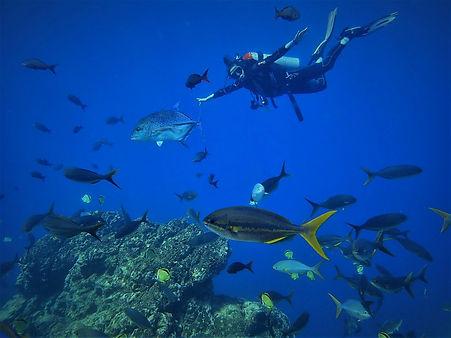 Scuba diving at Cano Island Drake Bay