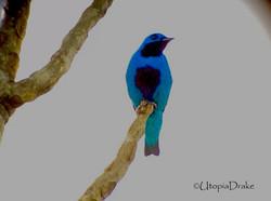 Bird watching tour in Drake Bay