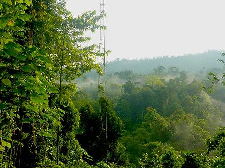 Caminatas en la jungla en Bahía Drake