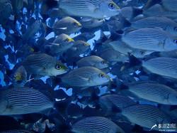 Snorkeling en Isla del Caño Bahía Drake