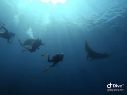 Scuba Diving Tour at Cano Island, Drake Bay
