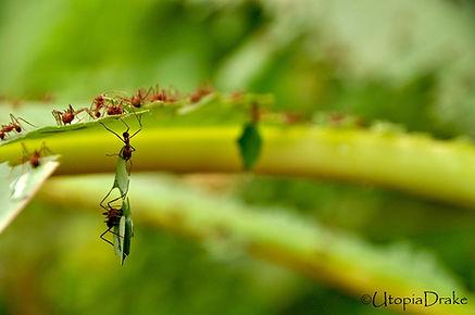 Hormigas en Parque Nacional Corcovado