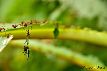 Ants in Corcovado National Park tour
