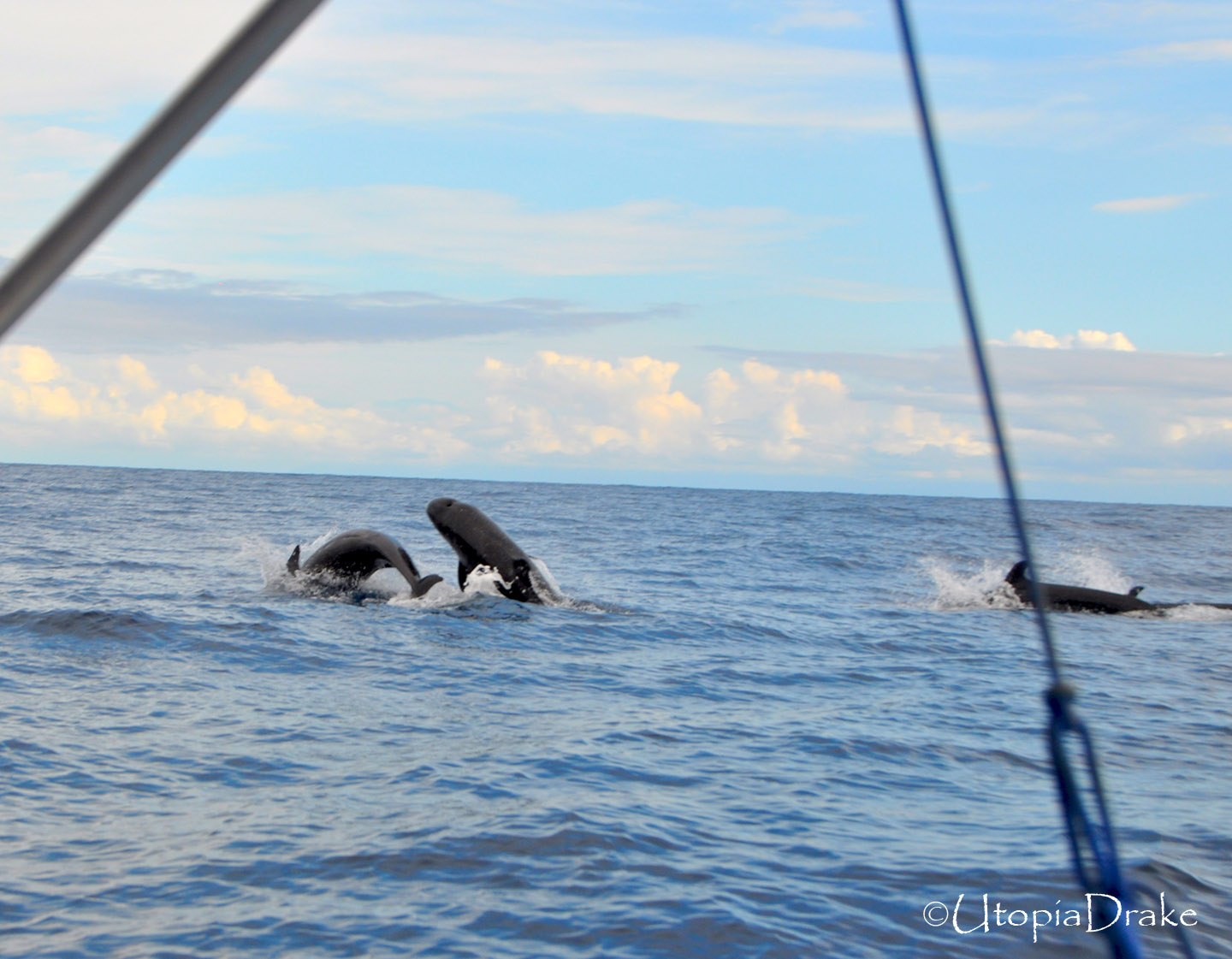 Whales and dolphin tour in Drake Bay