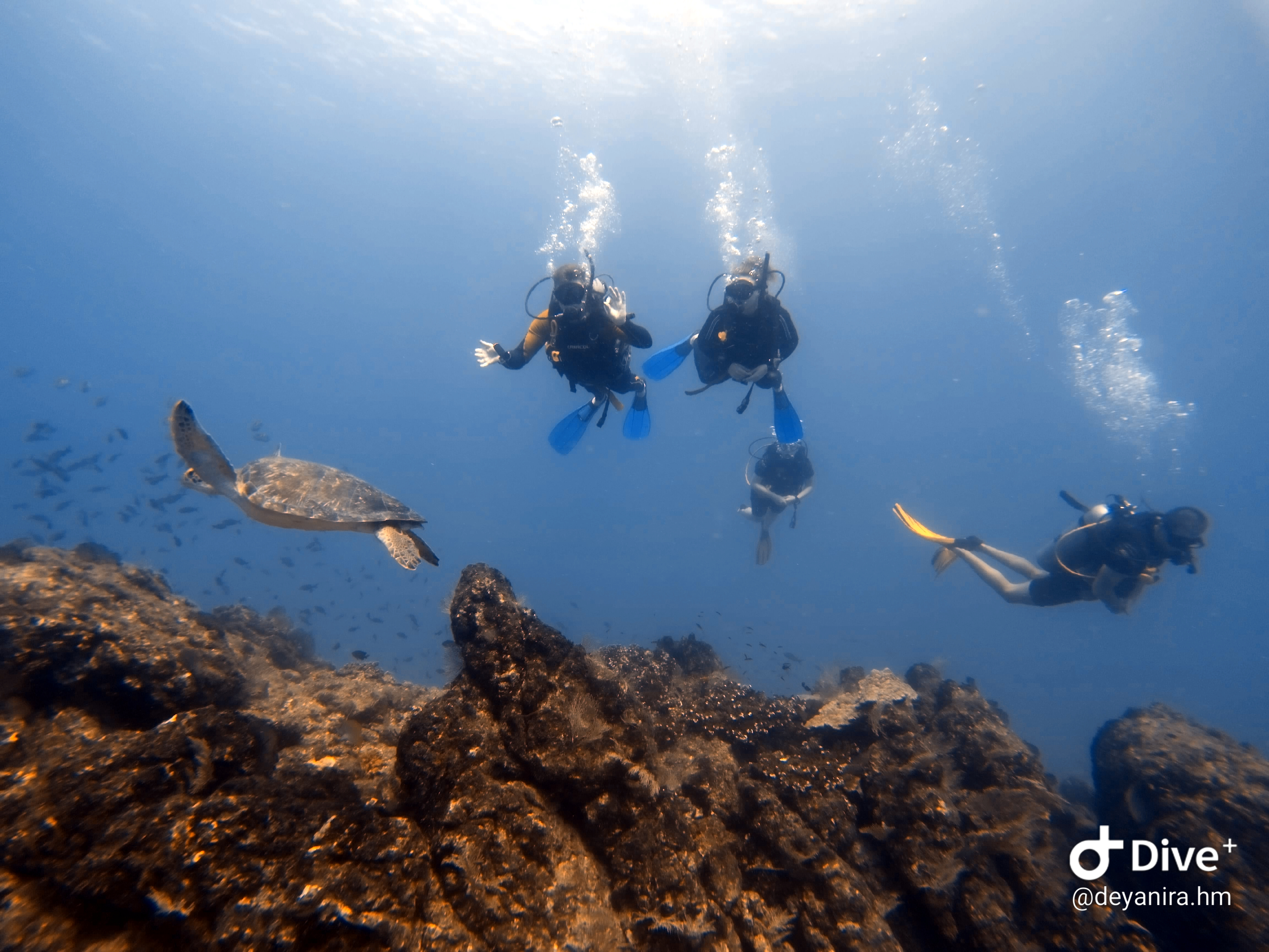 Scuba diving tour at Cano Island, Drake Bay