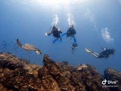 Scuba Diving at Cano Island, Drake Bay