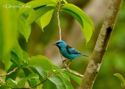 Avistamiento de aves Bahía Drake