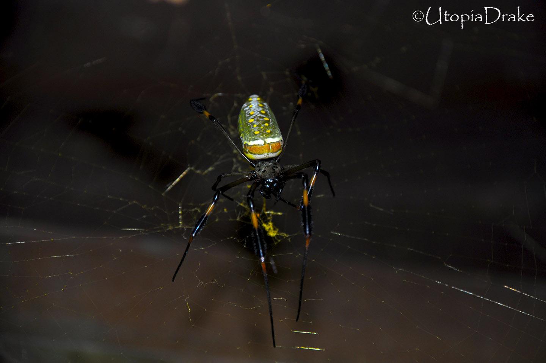 Araña en Parque Nacional Corcovado