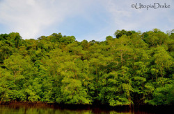 Mangrove tour in Drake Bay