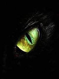 An image of an eye of The Dark Rose in dragon form