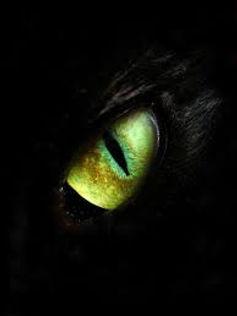 Green eye of The Dark Rose in dragon form