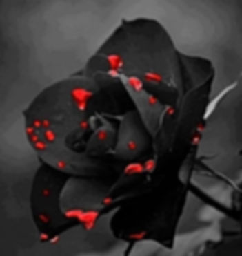 Bloodied dark rose