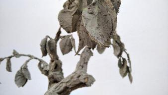 Bonsai (materiale organico vegetale rivestito di cemento) Veronica Monterisi