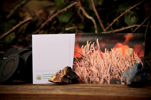 Stag Horn Fungus Postcard