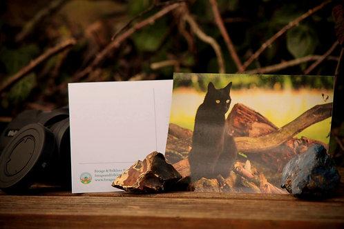 Forest Cat Postcard