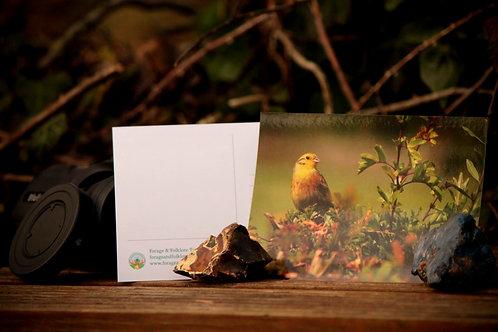 Yellowhammer Postcard