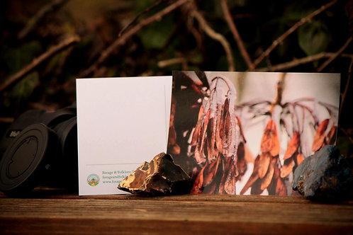 Frozen Ash Keys Postcard