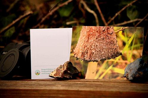 Shaggy Inkcap Postcard