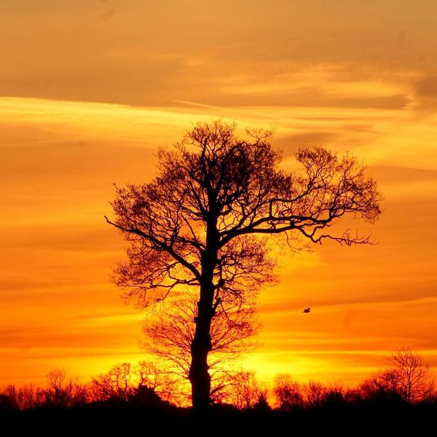Suffolk Sunrise