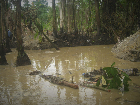 Quand la déforestation et l'exploitation minière menacent la vie des pygmées