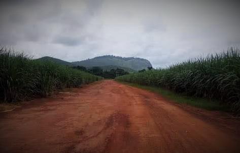 Comment les agro-industries privent les villageois camerounais de leur terre