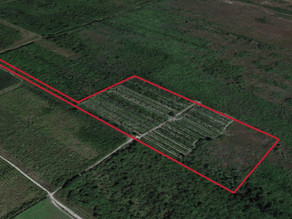 +/-20 Acre Agricultural / Palm Tree Nursery Land