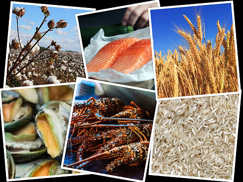 Grains, Cotton, Seafood.jpg