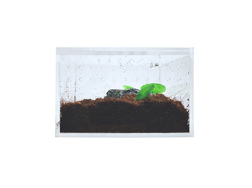 Acrylic Enclosure -Mini Flat