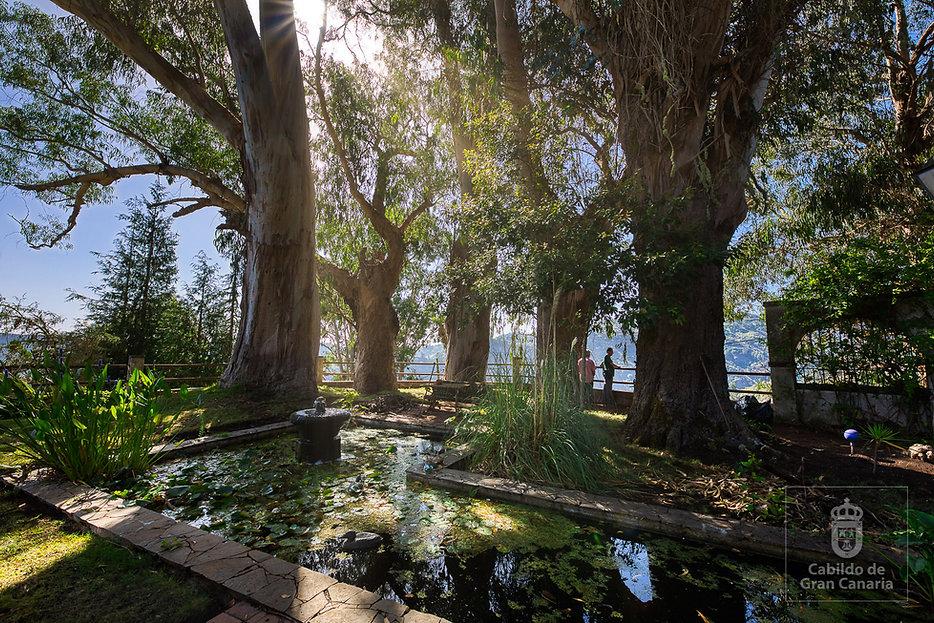 Eucaliptos_Jardín_de_Corvo_-_Árboles_S