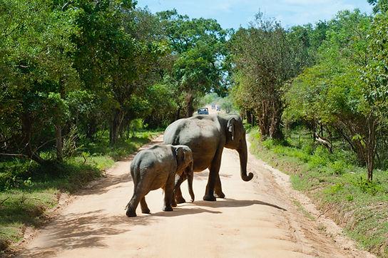 Elephant and Calf on Road.jpg