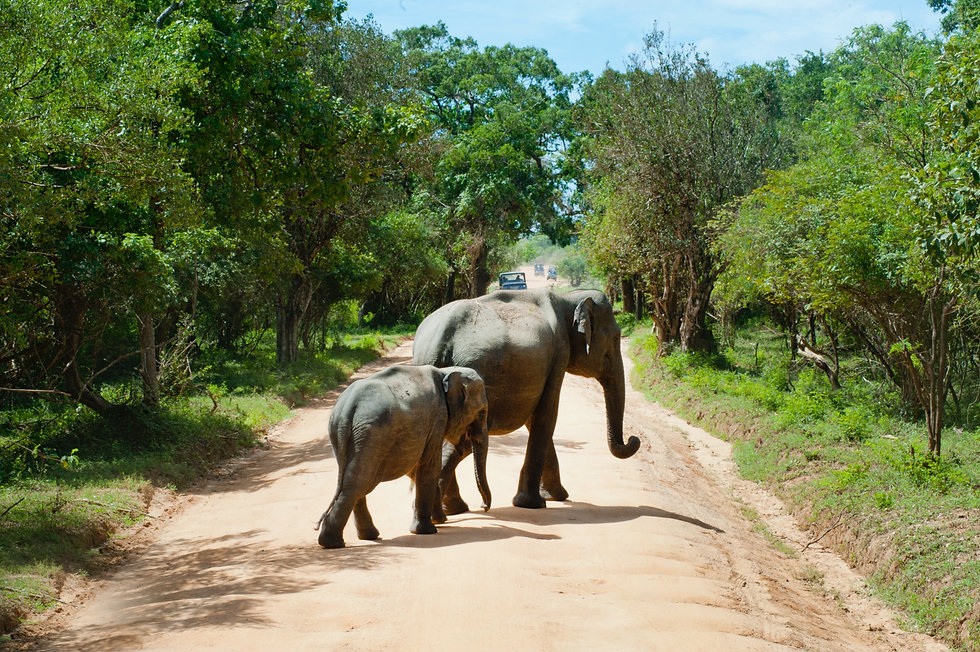 Elephant and Calf on Road.jpg