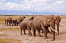 Elephant Group 4.jpg