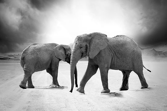 Fine Art Elephant.jpg