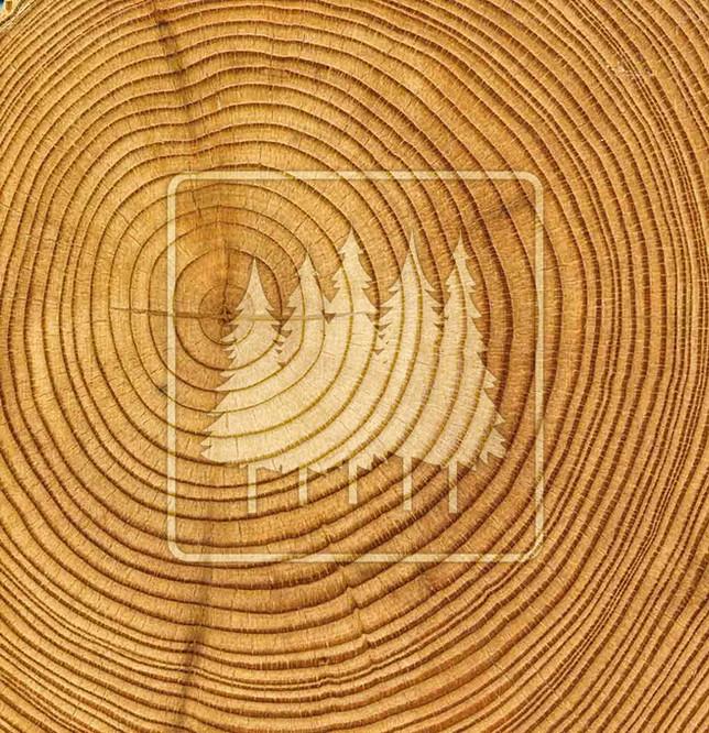 welco-tree-rings-logo.jpg