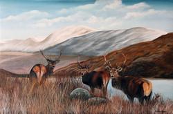 Schots winterlandschap