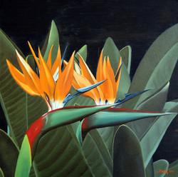Strelitzia (paradijsvogel bloem)
