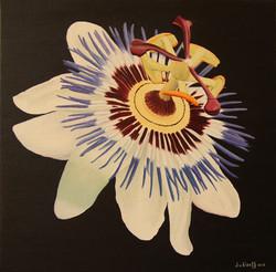 Passie bloem