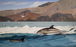Dolfijnen met zeemeeuwen.