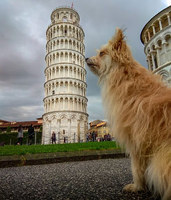 Kiba, the dog, at the Leaning Tower of Pisa