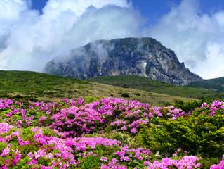 Jeju establecerá un sistema de reservas para excursionistas a la montaña Halla.