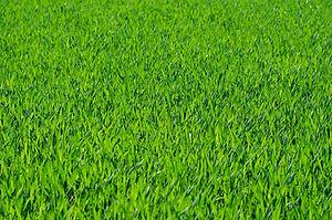grass-275986_1920.jpg