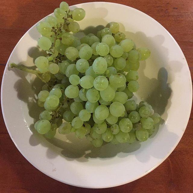 Свой родной виноград, пришёл, сорвал, по