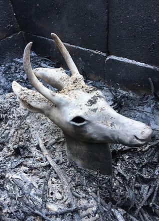 Deer in Pit.jpg